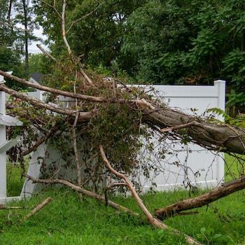 A tree fell on my fence: does my insurance cover it?